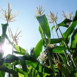 GMOs & Monsanto – Why They Are Unethical, Potentially Unsafe, and Unsustainable